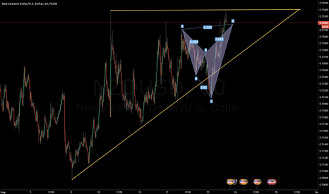 NZDUSD: Is this a good Shark?