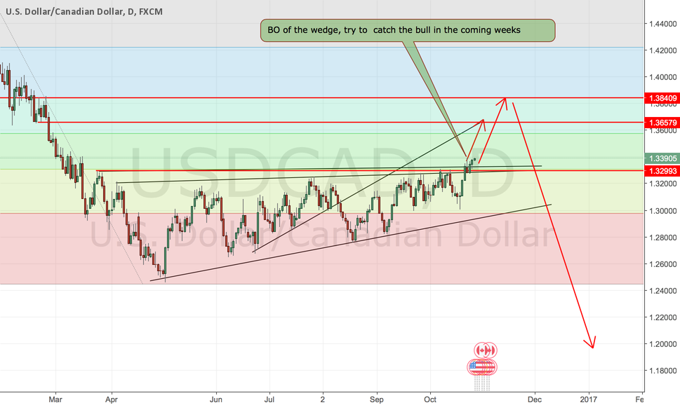 Catch the bull in the coming weeks  USDCAD