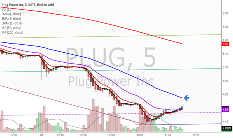PLUG: Bull crossing again.