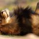 aslan.pheshhov