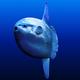 MightySunfish