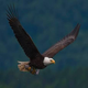 V-Eagles