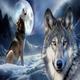 Thewolftrader